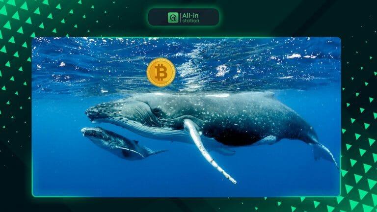 Một 'cá mập Bitcoin' vừa thức giấc sau hơn 7 năm không hoạt động